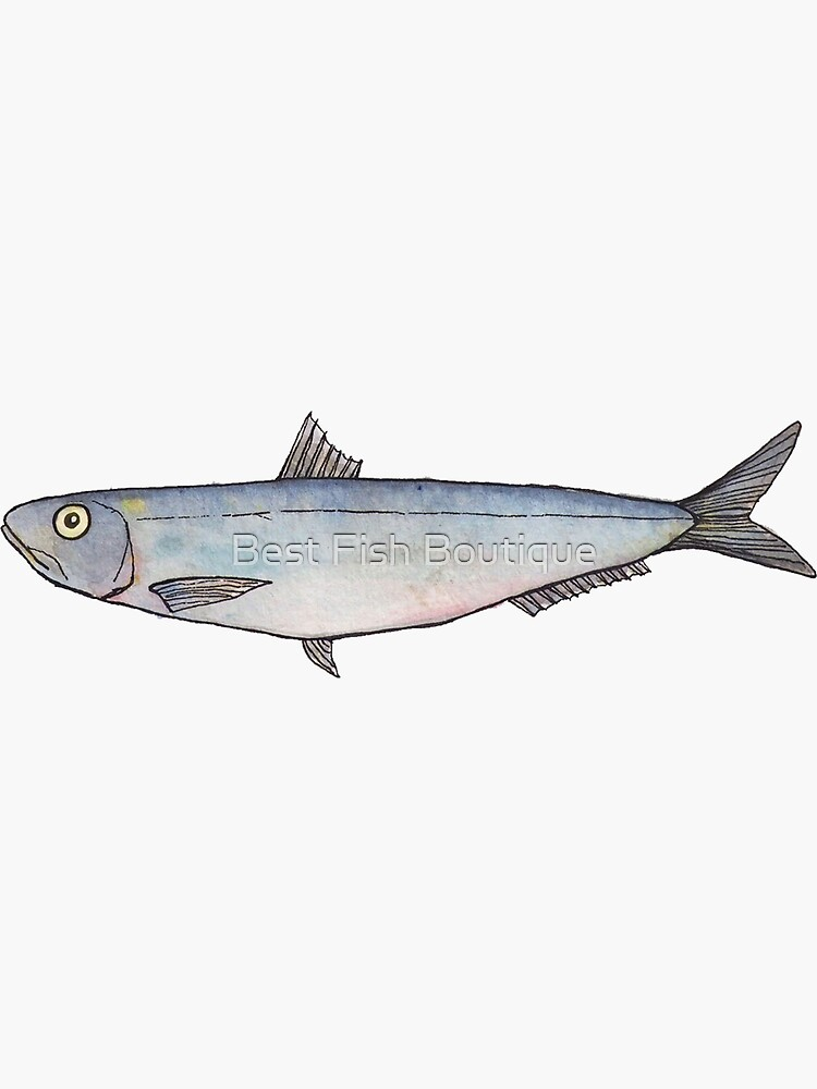 Sardine: Fish of Portugal by BestFish