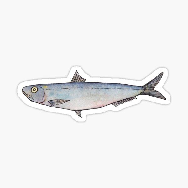 Sardine: Fish of Portugal Sticker