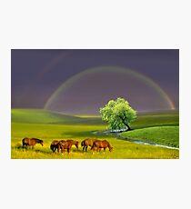 Grassland Photographic Print