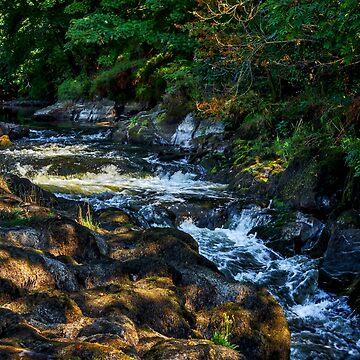 Cenarth Falls by mlphoto
