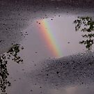 Puddle Bow by © Loree McComb