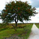 Rowan Tree in Summerfield by ienemien
