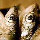 Sardines by sylvied