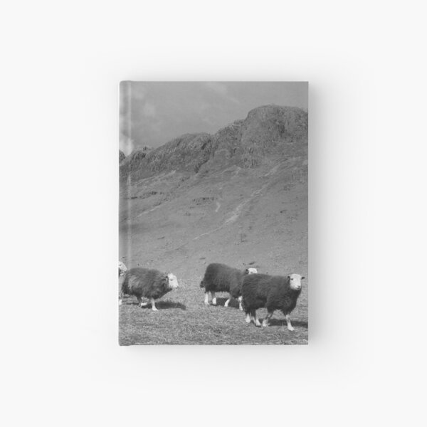 Herdwick sheep in Langdale Hardcover Journal