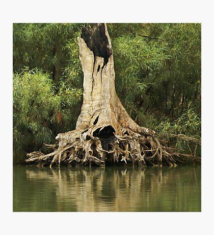 Roots of Wisdom Photographic Print