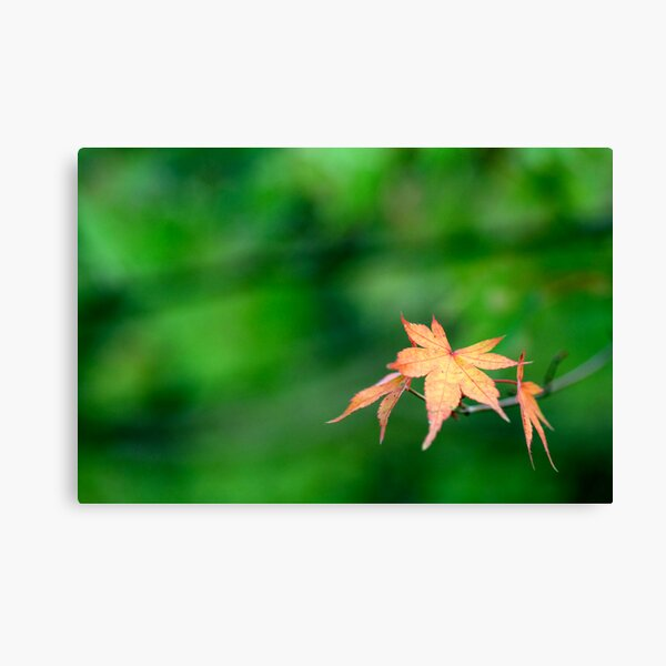 Early Bloomers Canvas Print