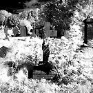 The Grave of Richard Bellwood Pattison by mikepom