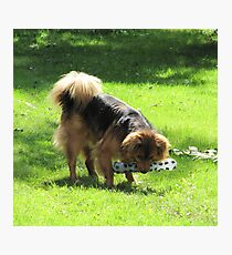 It's mine...all mine! Photographic Print