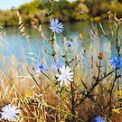 Summer Flowers by BellaStarr