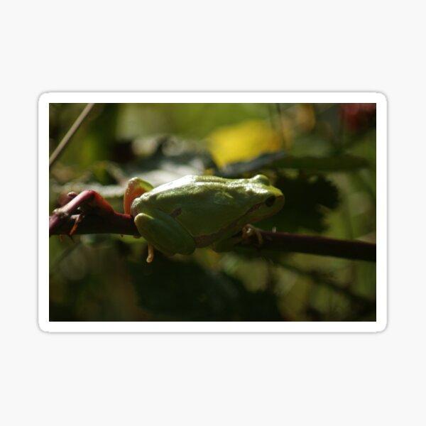 European Tree Frog Sticker