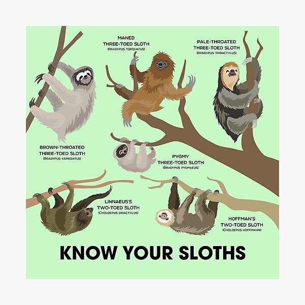 Know Your Sloths Photographic Print