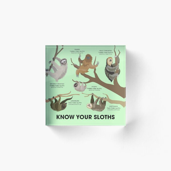 Know Your Sloths Acrylic Block