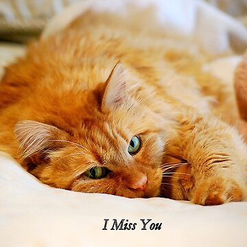 I Miss You, Maine Coon Cat by cathysherman