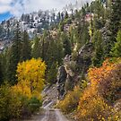Colors Of Fall  by Roy Nelson