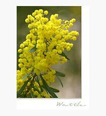 Wattle Photographic Print