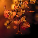 Fall Color Wash by Roy Nelson
