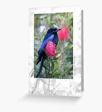 Australian Birdlife - Spangled Drongo Greeting Card