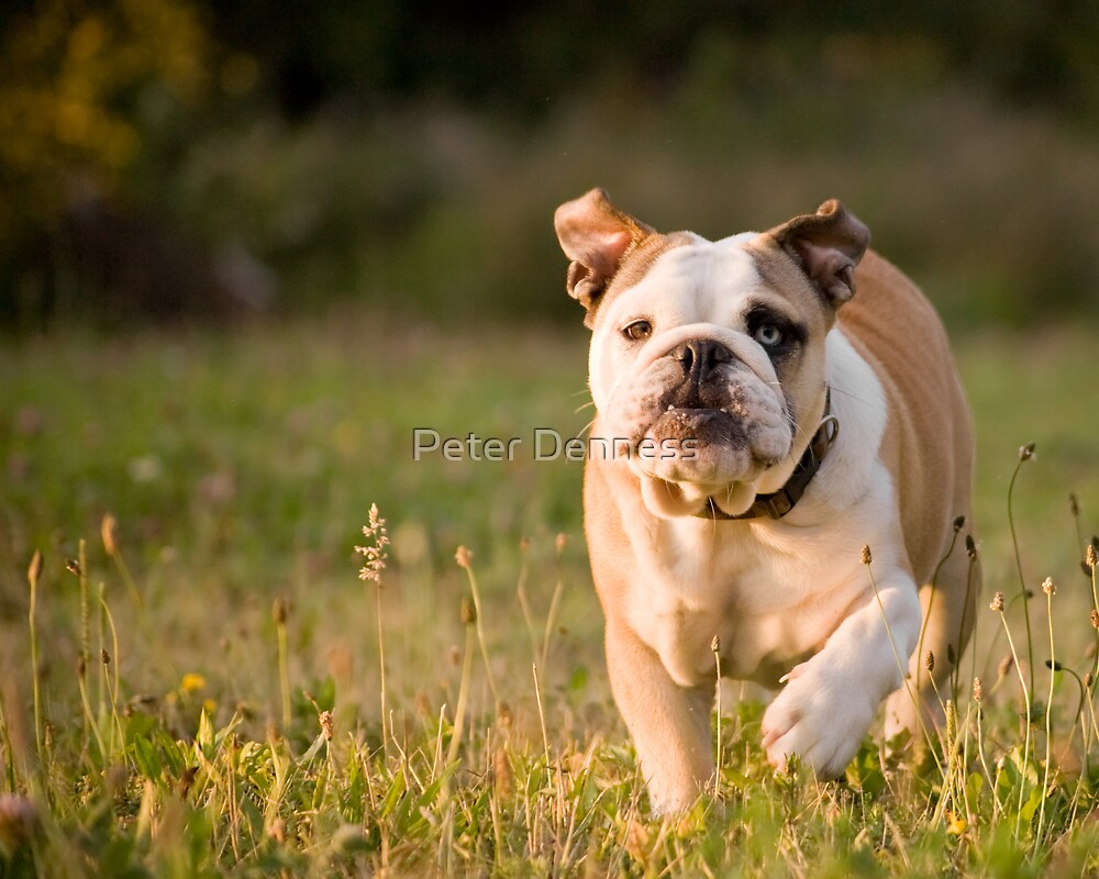 Winston by Peter Denness