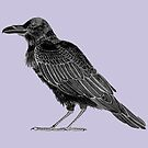 Corvid Collection Lavender Raven by Evvie Marin