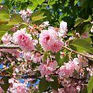 Boston Flowers by Jenni Heller