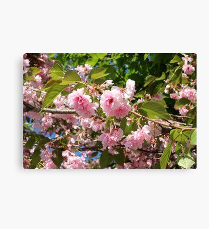 Boston Flowers Canvas Print