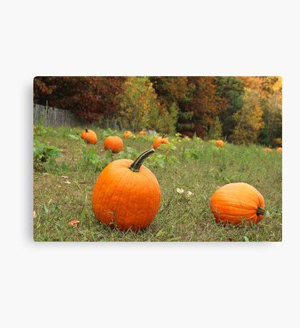 Pumpkin Picking Canvas Print