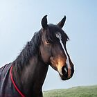 Handsome Horse by Pauline Tims