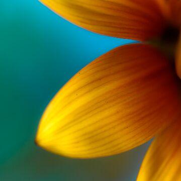 Ashley's Flower by ajlphotography