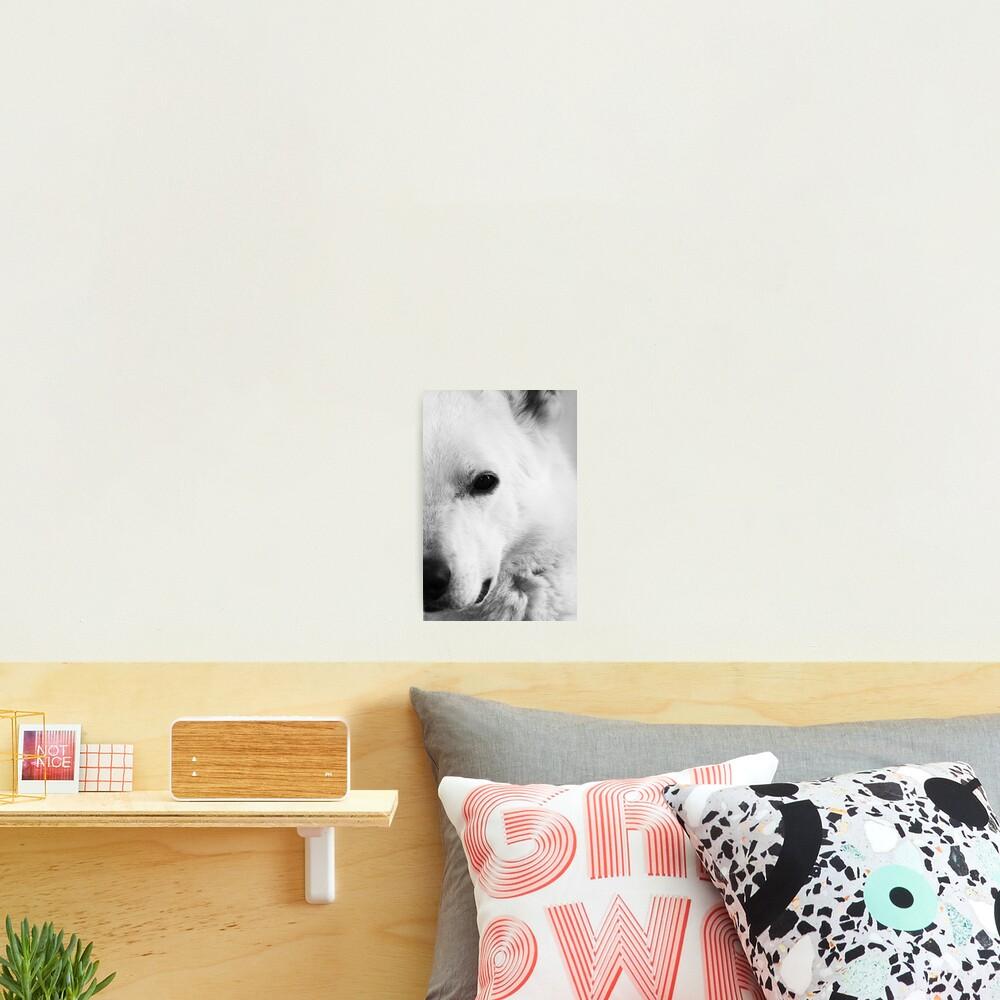 White German Shepherd Photographic Print