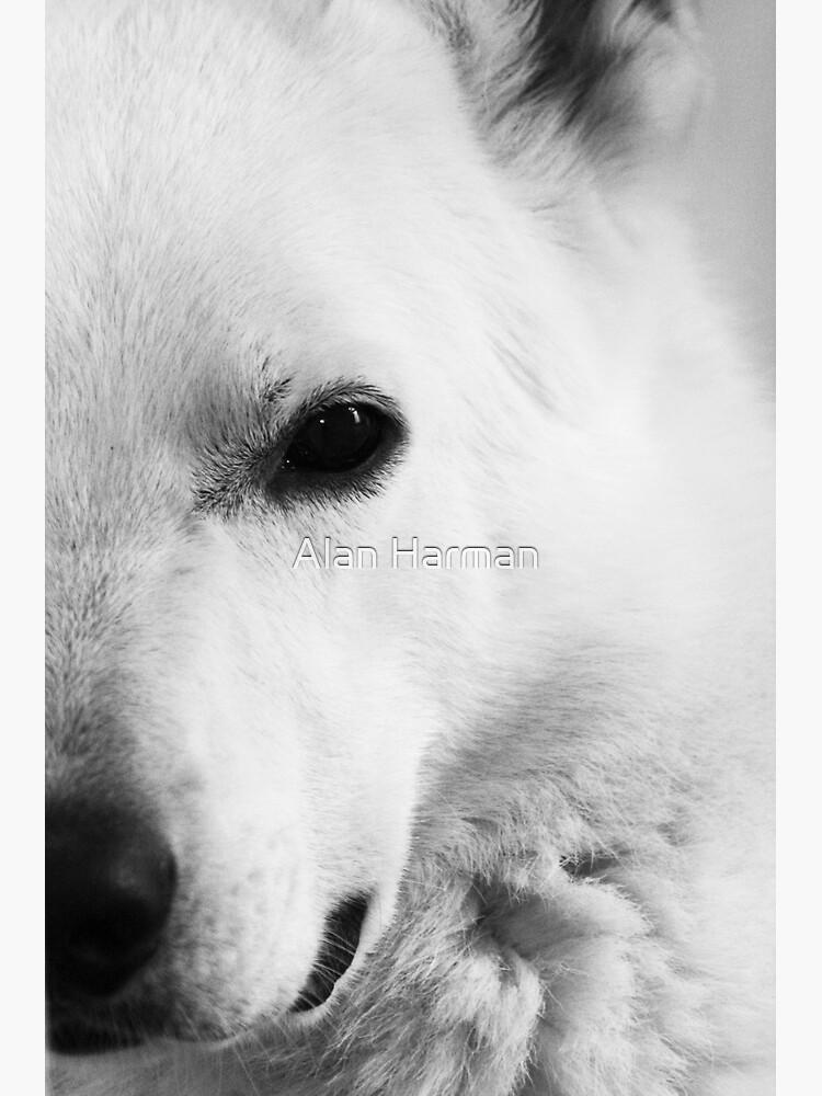 White German Shepherd by AlanHarman