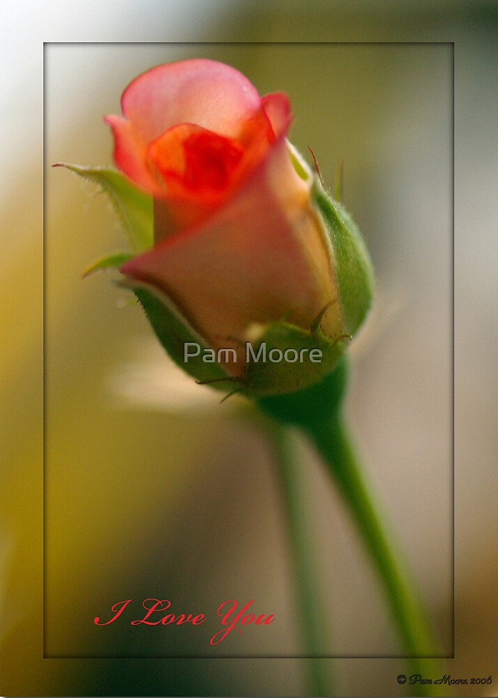 Rose of Romance by Pam Moore