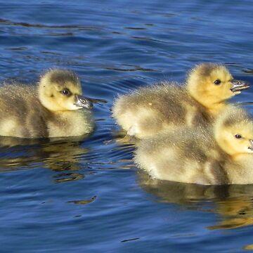 Gosling Chicks by MarthaMedford