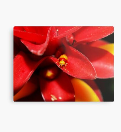 Red and Yellow bug Metal Print
