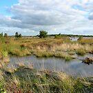 Wetlands Fochteloerveen by ienemien