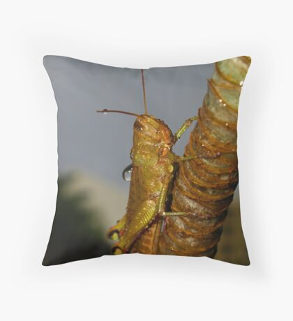 Wet Cricket Throw Pillow
