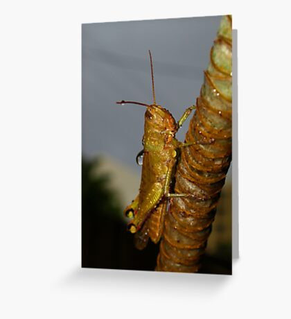Wet Cricket Greeting Card