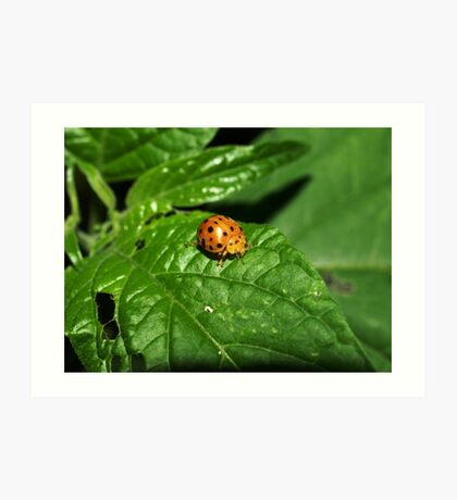 Fake Lady Beetle Art Print