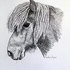 Pencil Drawing Bluebell Shetland Pony Equine by Madeline Dyer