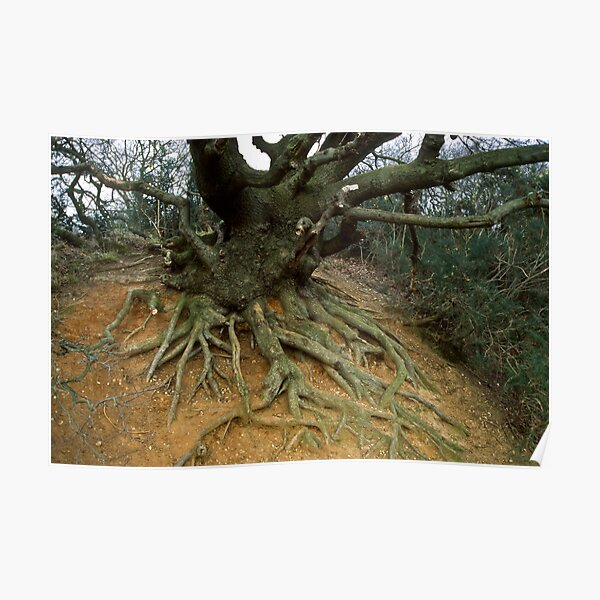 Tree Roots Uncovered Poster