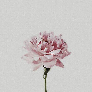 Pink Peony by FayeLangoulant