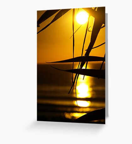 Leaves in the Sunlight Greeting Card