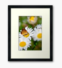 Flowers and Butterfly Framed Print