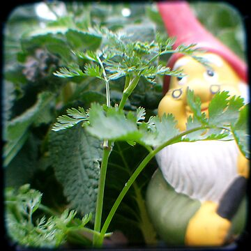 Parsley Gnome by NCGardens