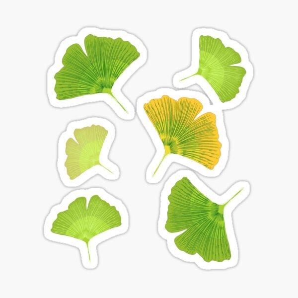 Leaves of Ginkgo biloba Sticker