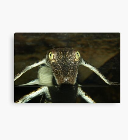 You Lookin at Me Canvas Print