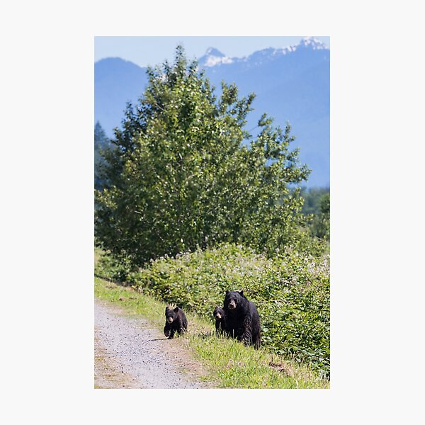 Mom & Cubs Photographic Print