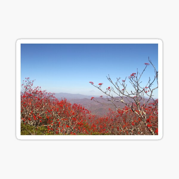 Red berries and blue sky, Autumn in the mountains Sticker