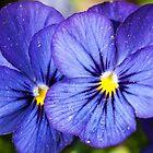 Purple Flowers by Doug Greenwald