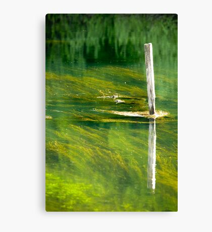 Reflections of the riverside in Rakov Skocjan gorge, Slovenia Canvas Print