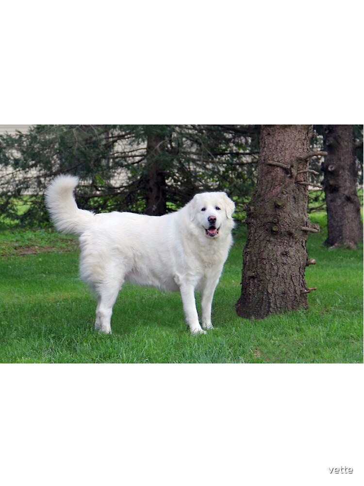 My Best Friend is Pyrenean Mountain Dog Messenger Bag